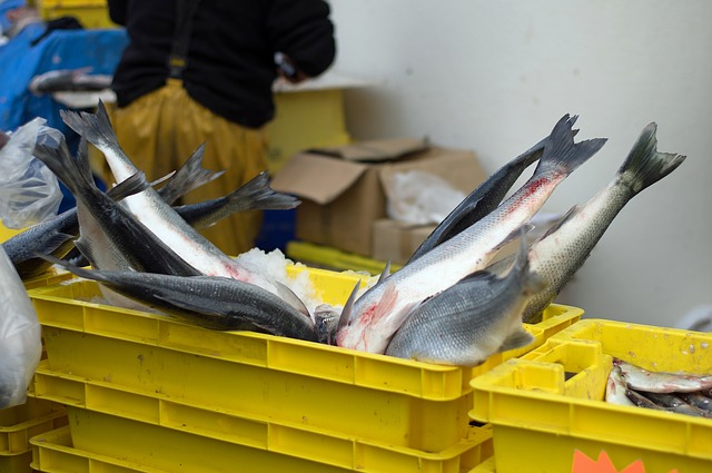 criées poissons